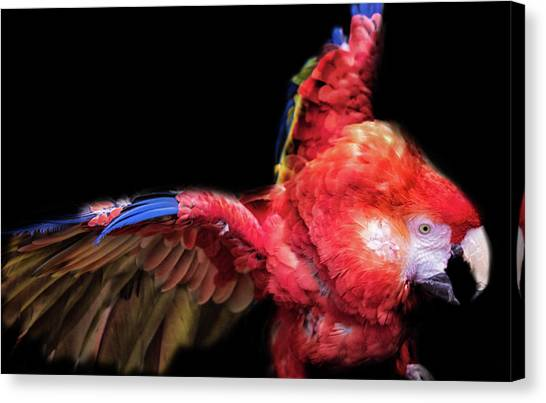 Macaws Canvas Print - Macaw by Martin Newman