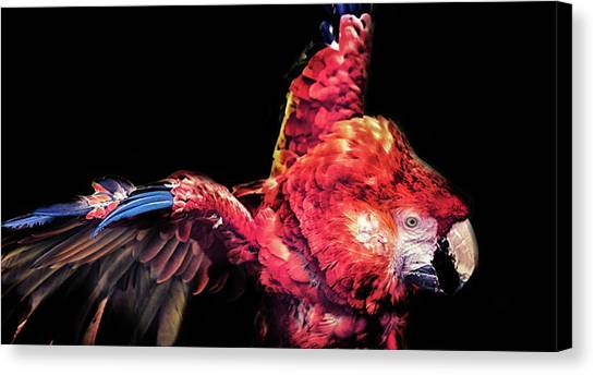 Macaws Canvas Print - Macaw Parrot by Martin Newman