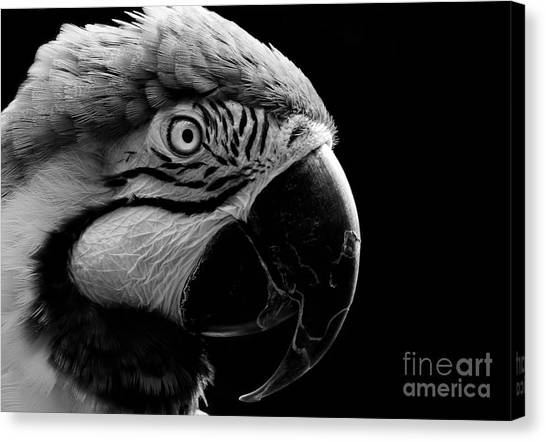 Macaw Parrot Portrait Black And White Canvas Print