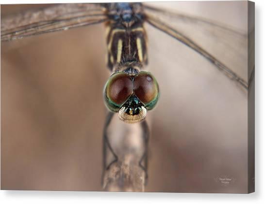 Macro Dragonfly Canvas Print