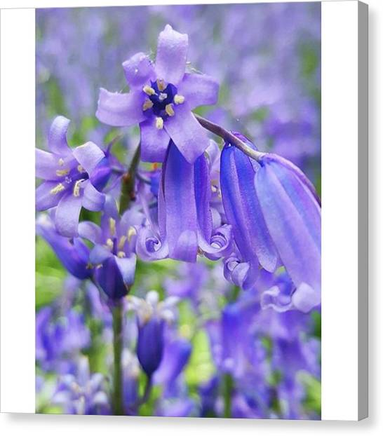 #macro #flower #flowers #bluebell Canvas Print by Natalie Anne