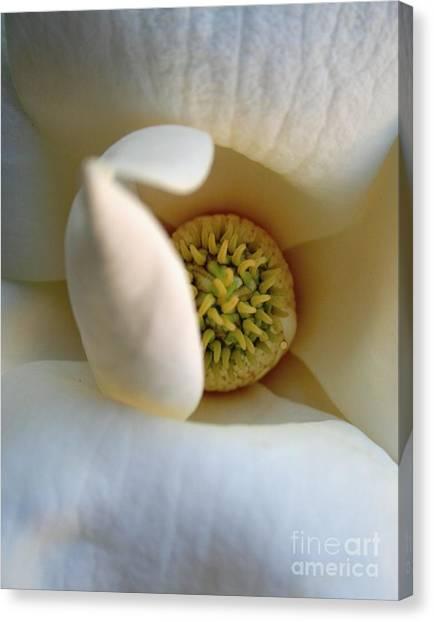 Macro Magnolia Canvas Print