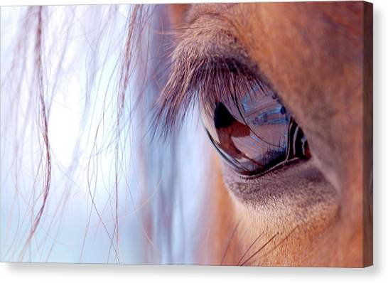 Nova Scotia Canvas Print - Macro Of Horse Eye by Anne Louise MacDonald of Hug a Horse Farm