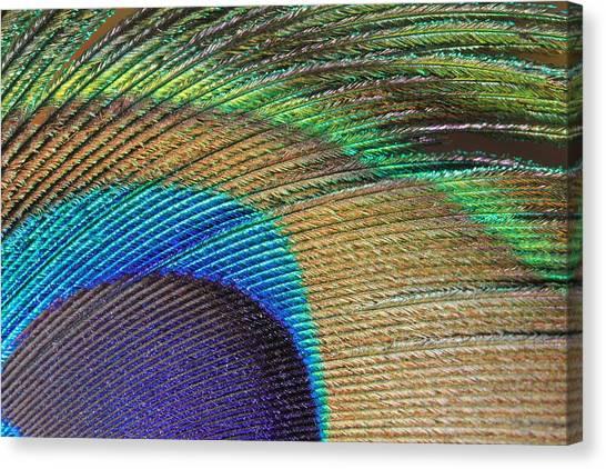 Macro Peacock Feather Canvas Print