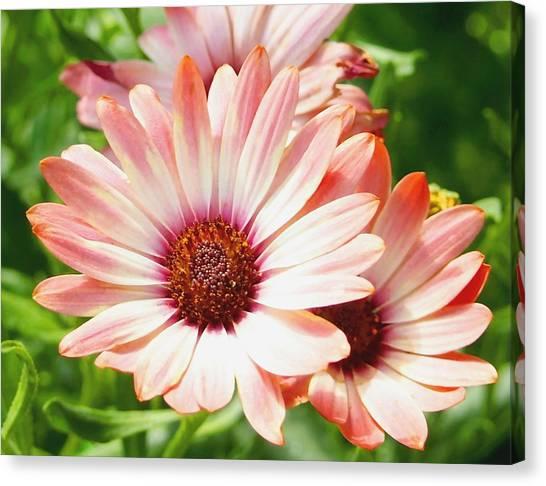 Macro Pink Cinnamon Tradewind Flower In The Garden Canvas Print