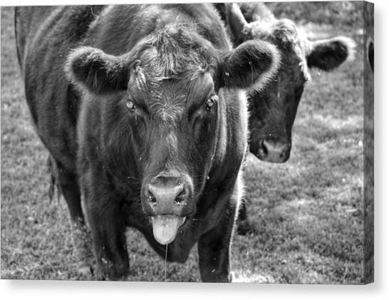 Mad Cow  Canvas Print