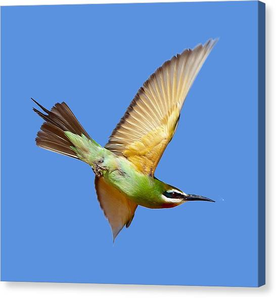 Madagascar Bee-eater T-shirt Canvas Print