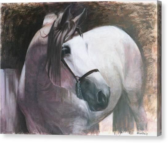 Madiera Canvas Print