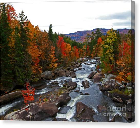 Magalloway River In Fall Canvas Print