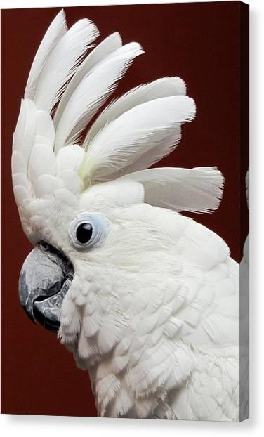 Canvas Print featuring the photograph Maggie The Umbrella Cockatoo by Bob Slitzan