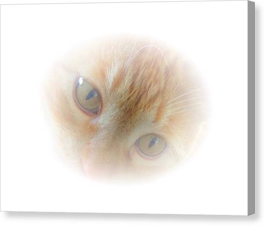Magic Eyes Canvas Print
