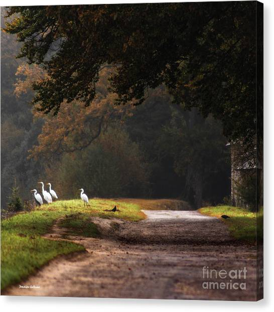 Magic Morning Canvas Print