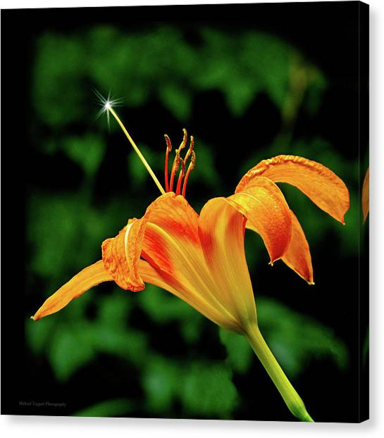 Magic Wand - Lily Canvas Print by Michael Taggart II