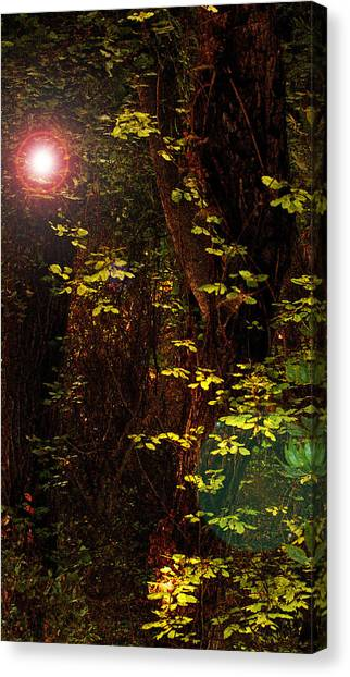 Magical Dark Woods Canvas Print by Jean Booth