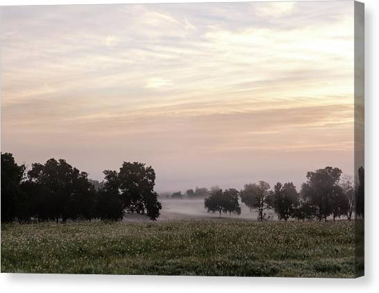 Magical Field Canvas Print