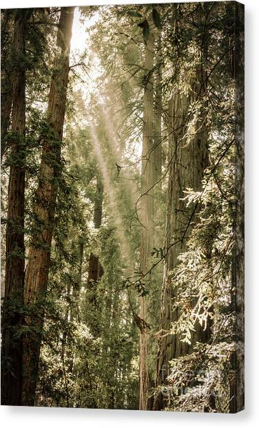 Magical Forest 2 Canvas Print