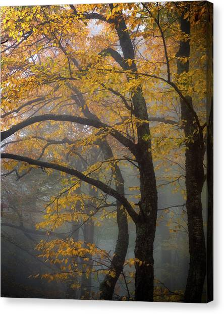 Magical Forest Blue Ridge Parkway Canvas Print