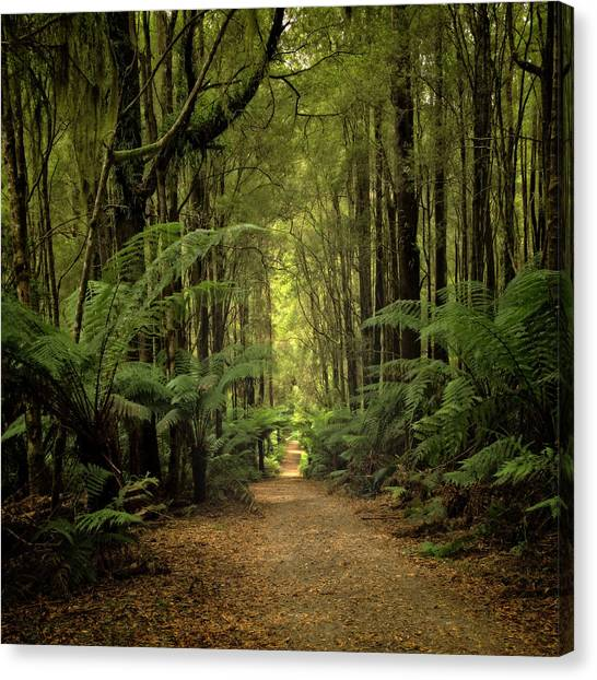 Great Otway National Park Canvas Print - Magical Forest by Catherine Reading