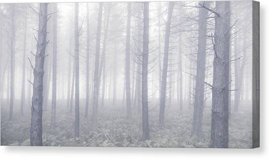 Canvas Print - Magical Forest by Richard Nixon