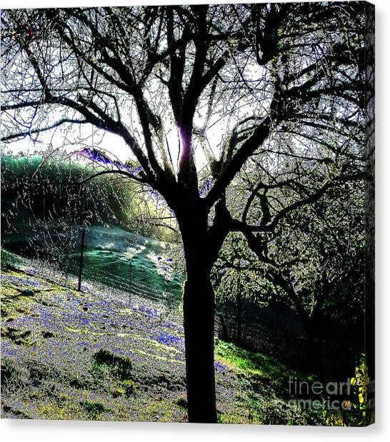 Magical Morning Canvas Print by JoAnn SkyWatcher