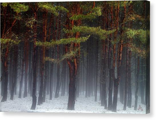 Magical Pines Canvas Print
