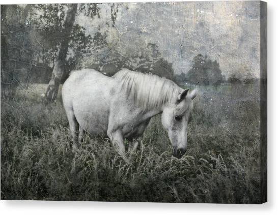Dreamy Horse Canvas Print - Magical View by Joachim G Pinkawa