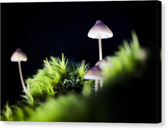 Magical World Of Mushrooms Canvas Print