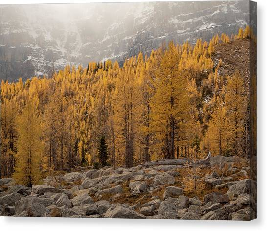 Magnificent Fall Canvas Print