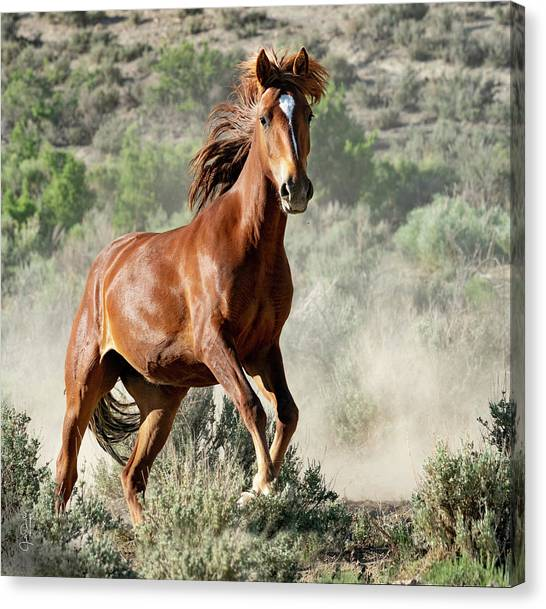 Magnificent Mustang Wildness Canvas Print