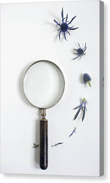 Magnifying Glass And Blue Thistle Canvas Print