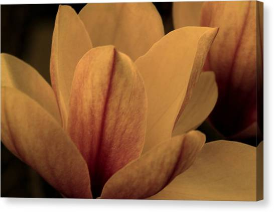 Canvas Print - Magnolia At Dawn by Russell Wilson