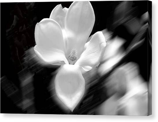Magnolia Black And White Abstract Canvas Print