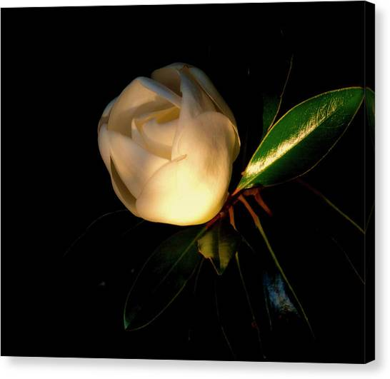 Canvas Print - Magnolia Blossom, Sunset Colors by Charles Schaefer