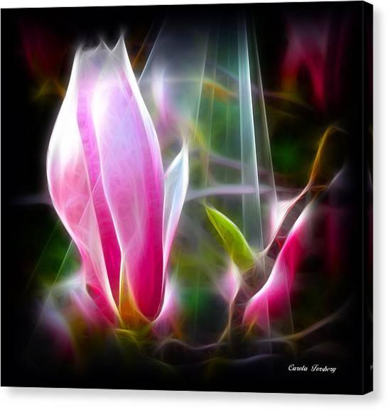 Magnolia  Canvas Print by Carola Ann-Margret Forsberg