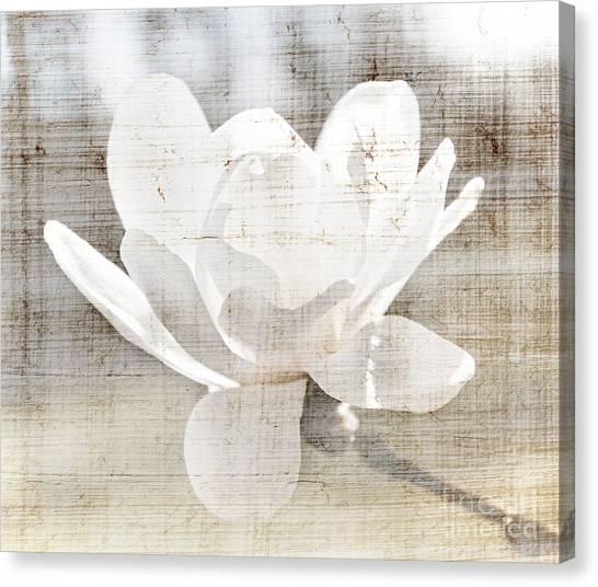 Magnolia Canvas Print - Magnolia Flower by Elena Elisseeva