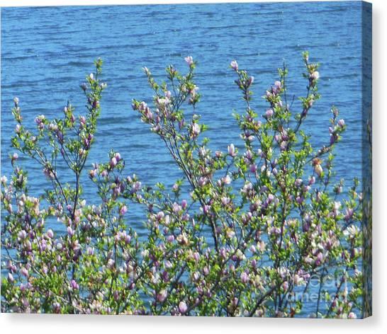 Magnolia Flowering Tree Blue Water Canvas Print