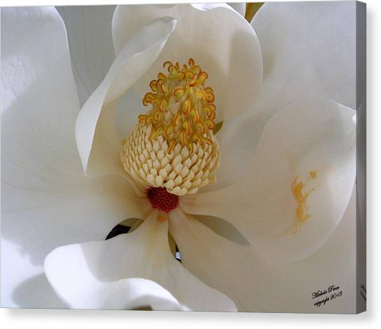 Magnolia Happiness Canvas Print
