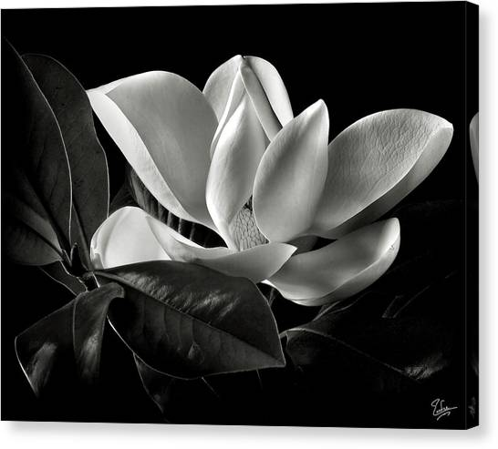 Magnolia In Black And White Canvas Print