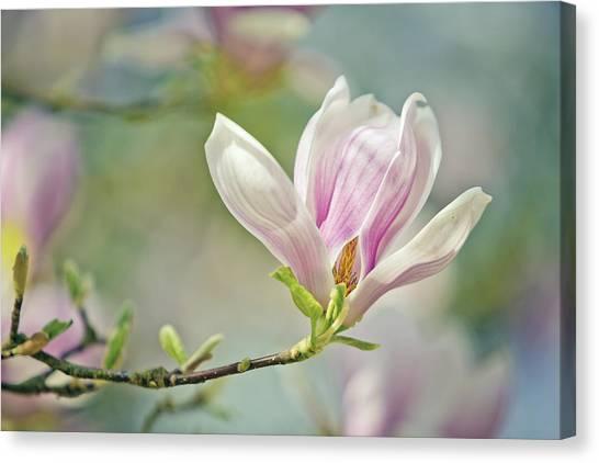 Botanical Garden Canvas Print - Magnolia by Nailia Schwarz