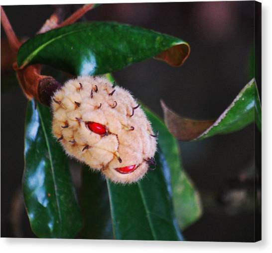 Magnolia Serpent Canvas Print by Trudi Southerland