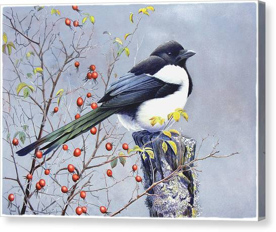 Magpies Canvas Print - Magpie by Dag Peterson