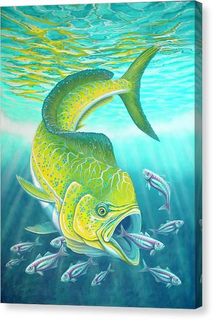Mahi Mahi Canvas Print
