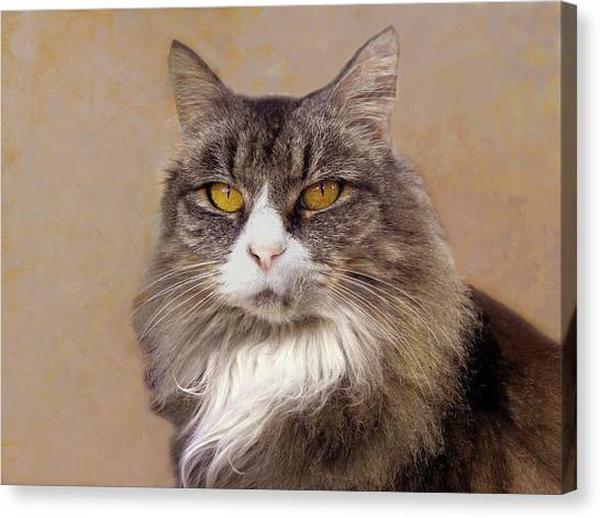 Main Coons Canvas Print - Main Coon Cat Portrait  by Sandi OReilly