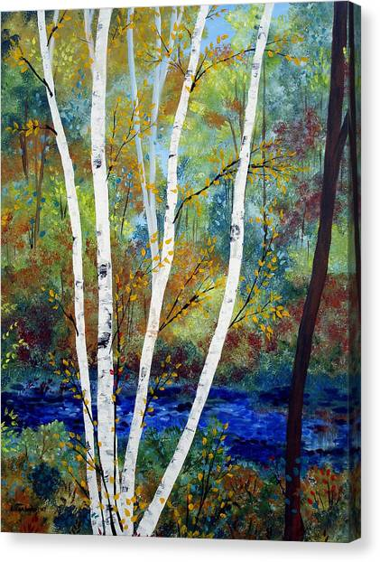 Maine Birch Stream Canvas Print by Laura Tasheiko