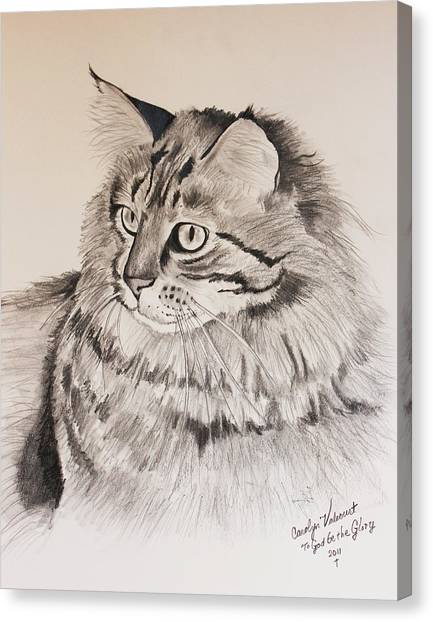 Maine Coon Cat Dusty Canvas Print by Carolyn Valcourt