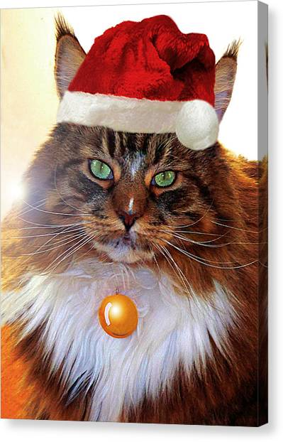 Canvas Print featuring the photograph Maine Coon Xmas by Roger Bester