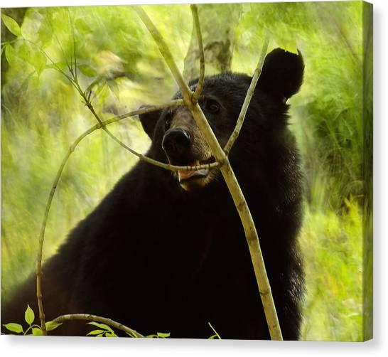 Majestic Black Bear Canvas Print