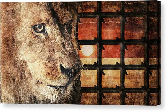 Majestic Lion In Captivity Canvas Print