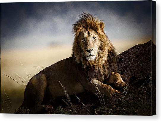 Kenyan Canvas Print - Majestic Male On Mound by Mike Gaudaur