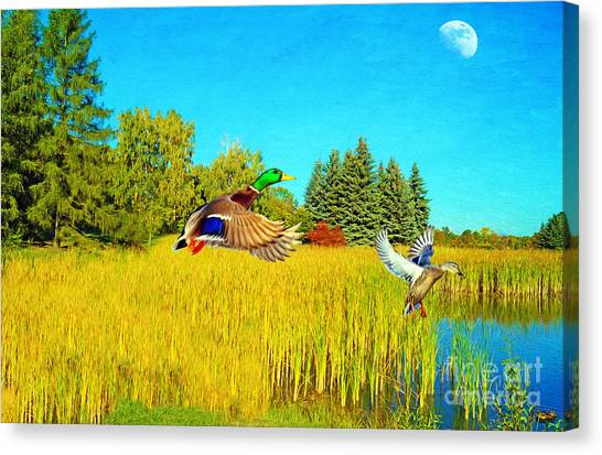 Drake Canvas Print - Majestic Mallards by Laura D Young